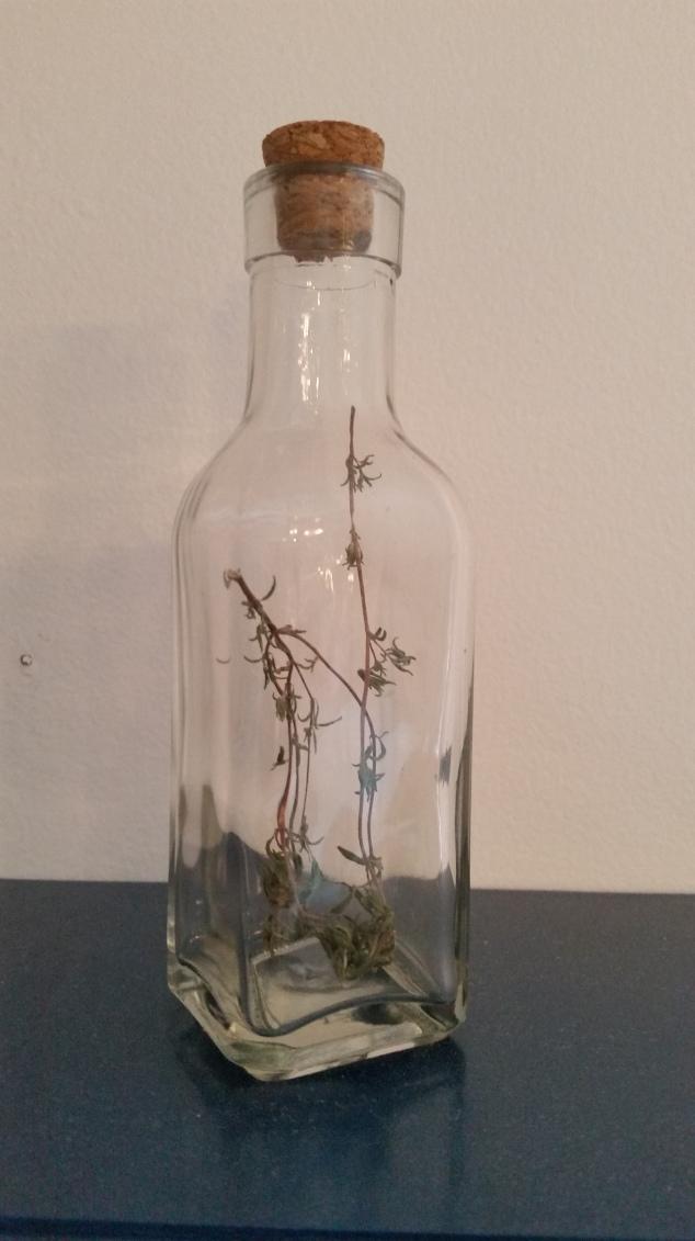 'Thyme' in a bottle
